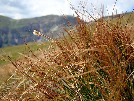Dry Grass, Grass, Mountains, Nature, Dry Plants, Dry