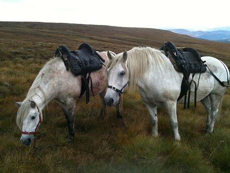 Stalking, Highland Ponies, Deer Hunting, Scotland