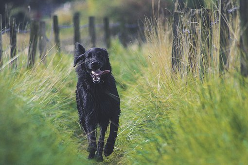 Dog, Animal, Black, Tongue, Nature, Landscape