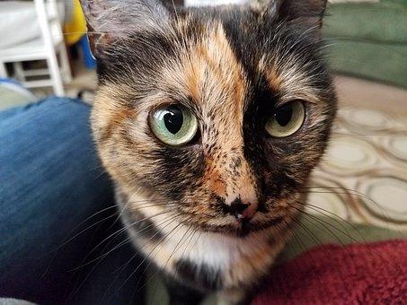 Cat, Tortoise Shell, Green Eyes