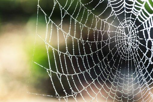 Spider Silk, Bokeh, Rain, Arachnid, Animal, Spider