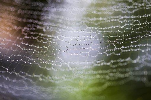 Web, Spider, Drops, Rain, Blur, Net, Macro, Close