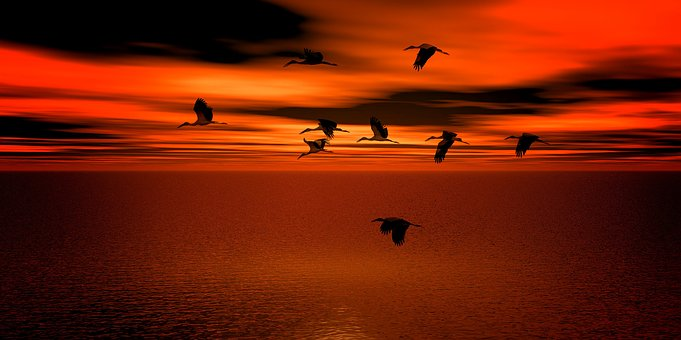 Sunset, Geese, Water, Sea, Sky, Migratory Birds