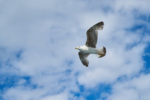 Seagull, Bird, Birds, Animal, Nature, Gulls, Day, Blue
