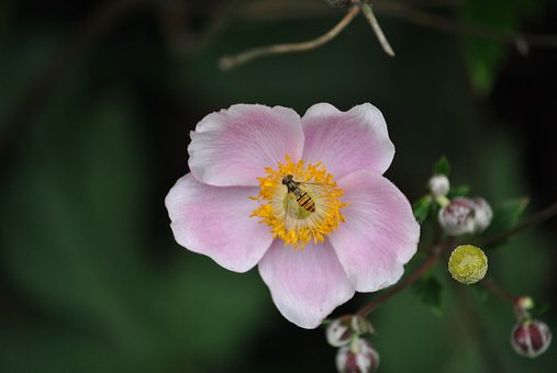 Blossom, Bloom, Bee, Insect, Close, Flower, Pollination
