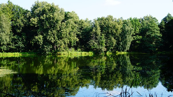 Russia, Moscow Region, Body Of Water, Summer, Lake
