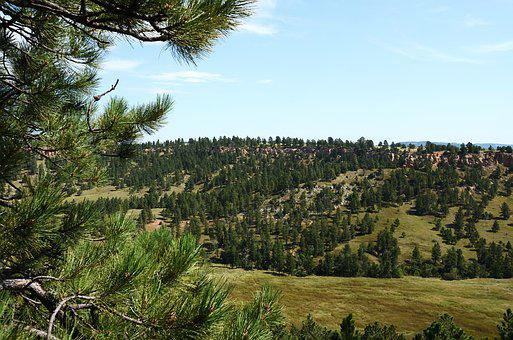 Black Hills, South Dakota, Dakota, Landscape, Outdoors