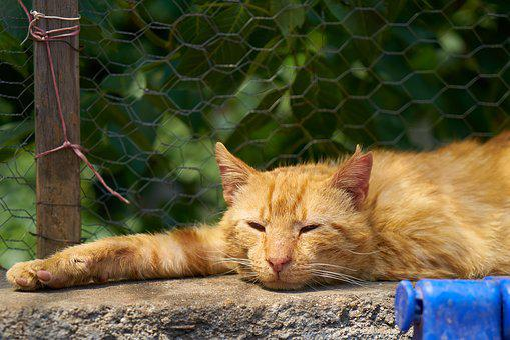 Cat, Animal, Yellow, Sleepyhead, Sleep, Relax, Paw