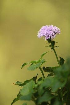 Flower, Summer, Grass, Cute, Childhood, Mood, At Home