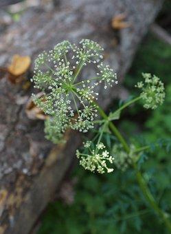 Wildflower, White, Bloom, Wood, Contrast, Romantic