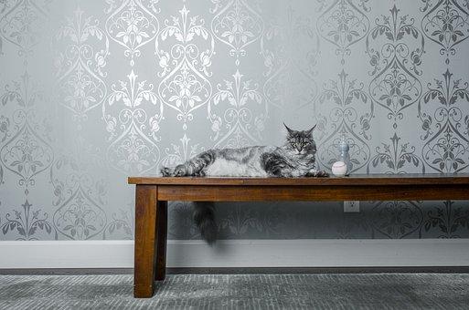 Cat, Animal, Kitten, Table, Eyes, Whiskers, Chill