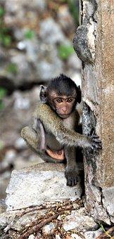 Baby, Monkey, Cute, Wildlife, Animal, Jungle, Adorable