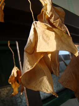Dry Leaves, Dry Flowers, Drought, Foliage, Dead