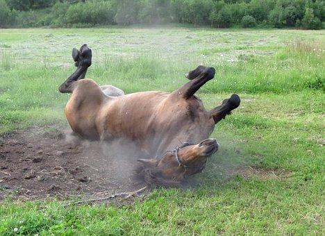 Horse, Mare, Stallion, Animal, Summer, Field, Cicindela