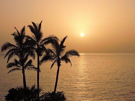 Romantic, Sunset, Atardeser, Sea, Palms, Palma