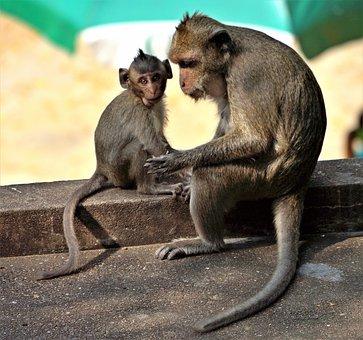 Monkey, Baby, Grooming, Cute, Animal, Wild, Wildlife
