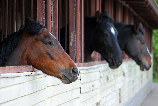 Horses, Stable, Animal, Ranch, Stallion, Equestrian