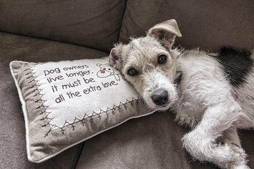 Dog, Read, Sofa, Animal, Canine, Pet, Portrait, Couch