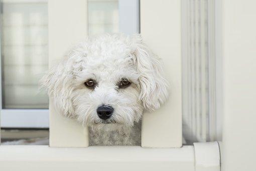 Dog, Sad, Face, Sad Dog, Pet, Animal, Canine, Eyes