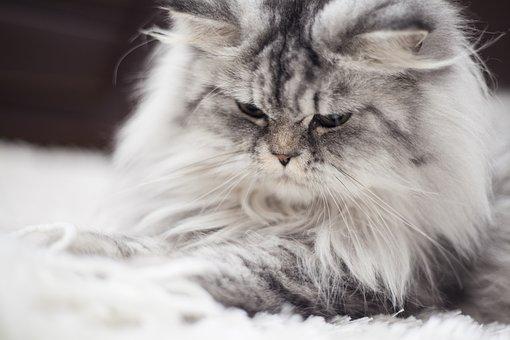 Cat, Animal, Animal Portrait, Kitty, Animals, Feather