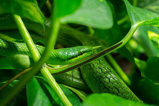 Snake, Leaves, Green, Zoo, Tree, Grass Snake, Young