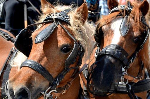 Pony, Horse, Horse-drawn Carriage Pony, Monteaura