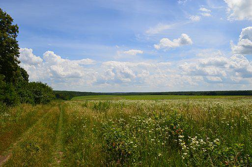 Field, Forest, Road, Clouds, Sky, Summer, Landscape