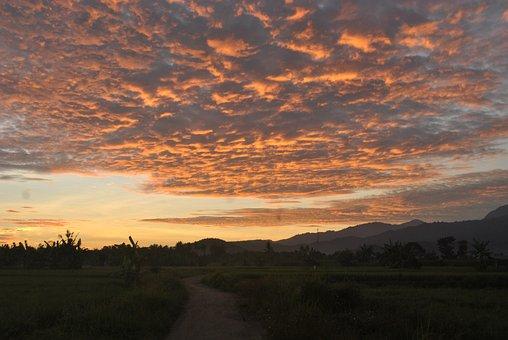 Sunrise, Ricefields, Sumbawa