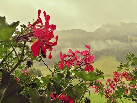 Flowers, Alps, Austria, Mountains, Tyrol, Living Nature