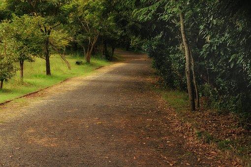 Park, Ecological, Lane, Earth, Nature, Flying, Trunk