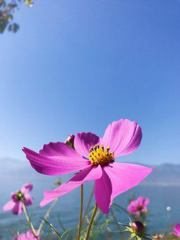 Erhai Lake, In Yunnan Province, Double-gallery, Flower