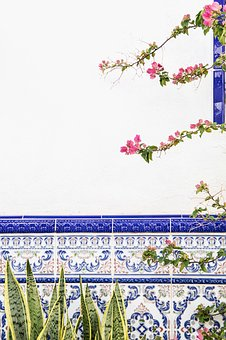 Flower, Green, Leaf, Plant, Nature, Outdoor, Wall, Blue