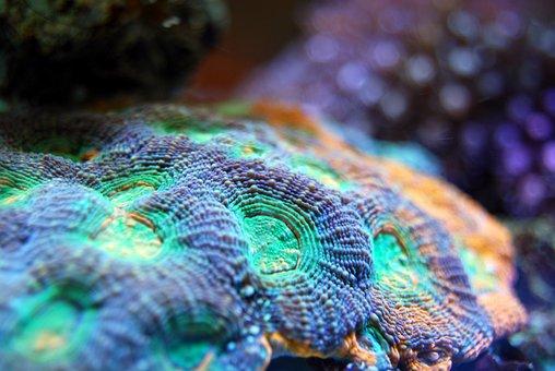 Coral, Reef, Sea, Underwater, Marine, Ocean, Animal