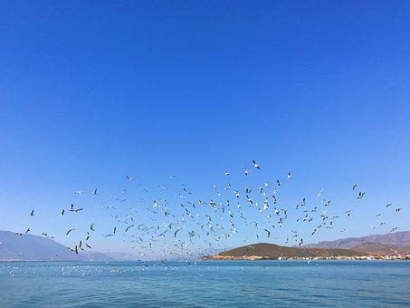 Erhai Lake, In Yunnan Province, Double-gallery, Seagull