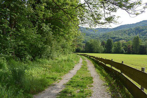 Away, Nature, Trees, Landscape, Trail