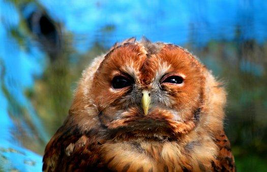 Owl, Bird, Animal, Raptor, Plumage, Animal World