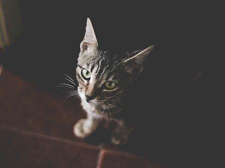 Cat, Pet, Animal, Black, Floor, Kitten, Cute, Eyes
