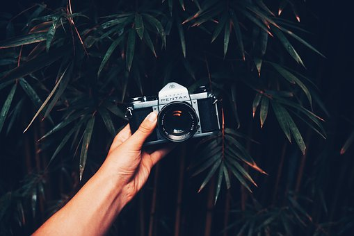 Hand, Arm, Bamboo, Tree, Dark, Nature, Outdoor, Camera