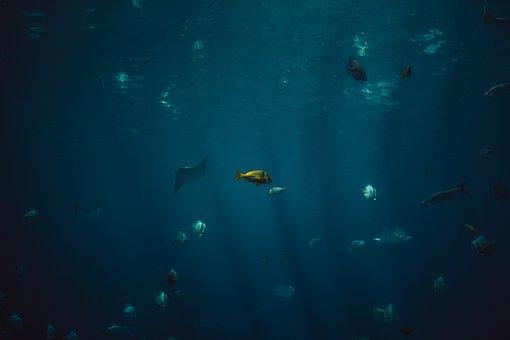 Fish, Aquatic, Animal, Ocean, Underwater, Blue