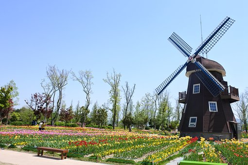 Suncheon Bay, Flowers, Garden, Flower, Netherlands