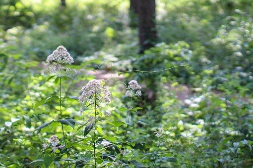 Trees, Arbor, Arboretum, Nature, Plant, Green, Natural