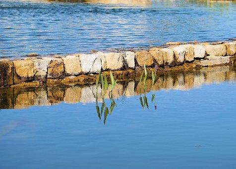 Pond, Water, Nature, Aquatic Plants, Green, Wall