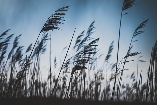Field, Clouds, Sky, Crops, Plantation, Nature, Sunshine