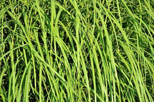 Grass, Blades Of Grass, Grasses, Meadow, Grass Green