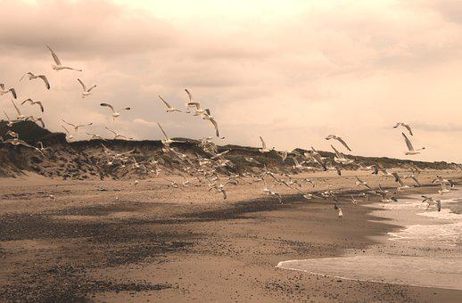 Gulls, Beach, Sepia, Bird, North Sea, Most Beach, Sky