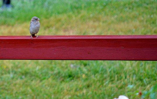 Bird, Animal, Wild, Nature, Wildlife, Feather, Wing