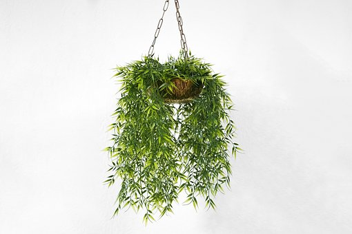 Wall, Plant, Orchids, Hanging, Plants, White, Pot