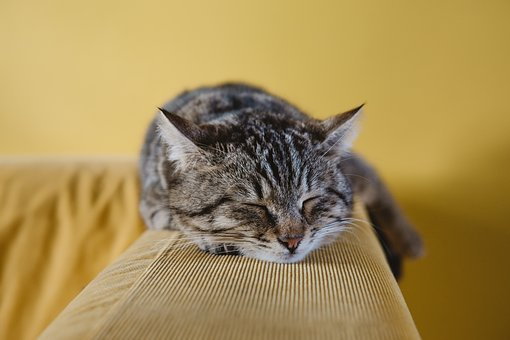 Cat, Cute, Animal, Couch, Sofa, Sleeping, Rest, Black