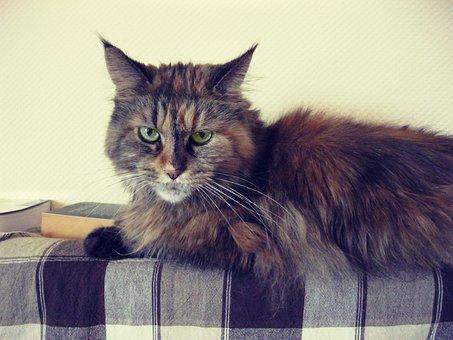 Cat, Animal, Kitten, Cute, Eyes