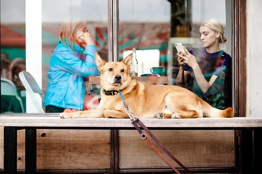 Dog, Animal, Leash, Outside, People, Pet, Women, Dine